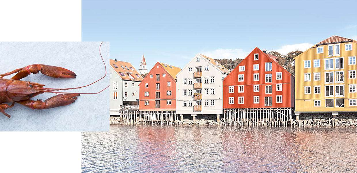 Experience autumn in the Nordics