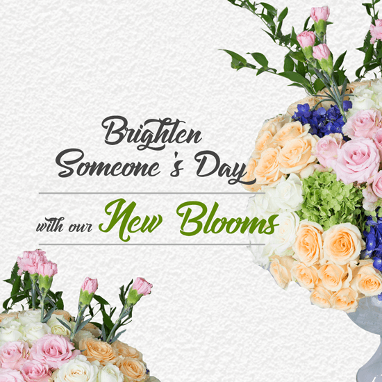Brighten Someone's Day with our New Blooms