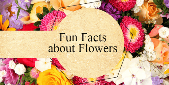 Funt Facts About Flowers