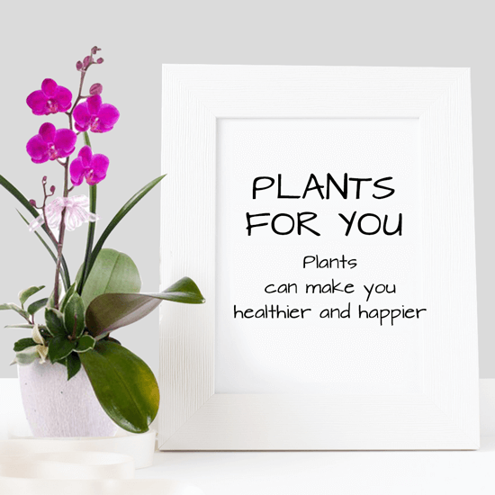 Plants For You