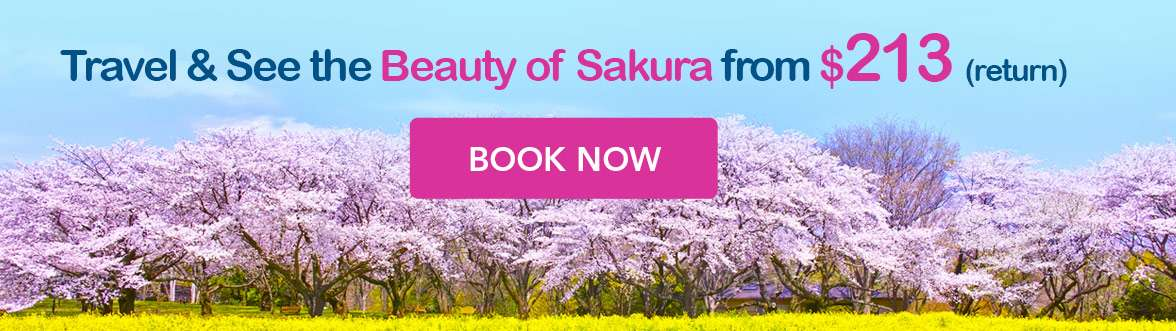Travel & See the Beauty of Sakura now