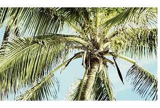 Princesse tam.tam | Tropical