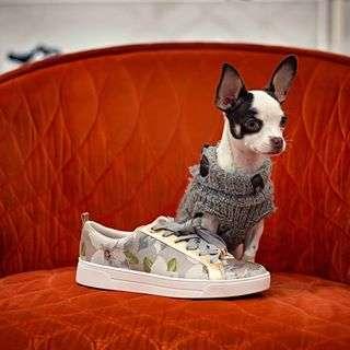 Sneakers for love â¤No, Kiwi didn't taste the shoe. But my my, the color! A hint of luxury. Thank you to my trustworthy 📷 @riotcolorphoto ...#ilovemypuppy #shoesareagirlsbestfriend #springintostyle