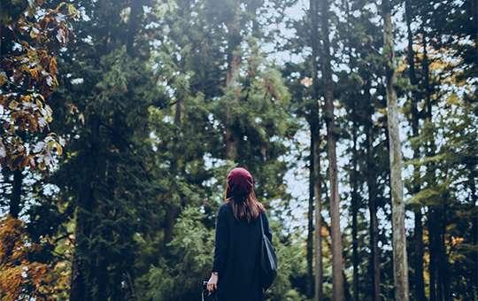 A HEALING FOREST