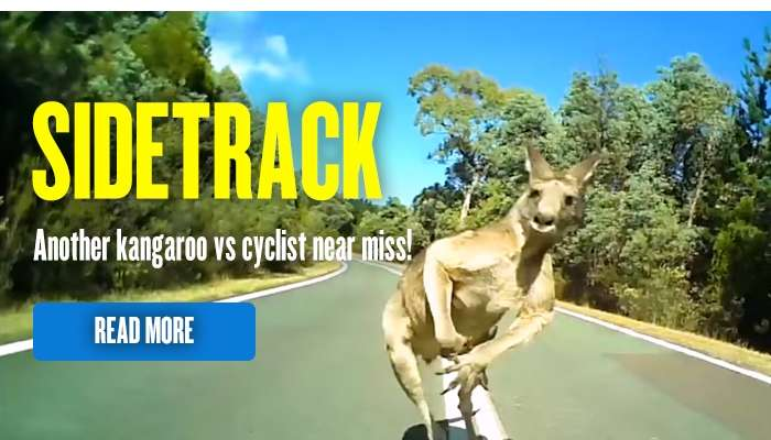 Another kangaroo vs cyclist near miss!