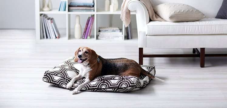 Coziest Pet Beds