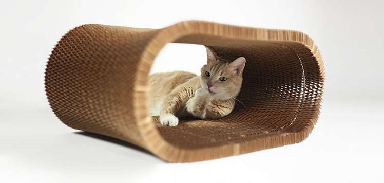 Top Finds for Your Feline