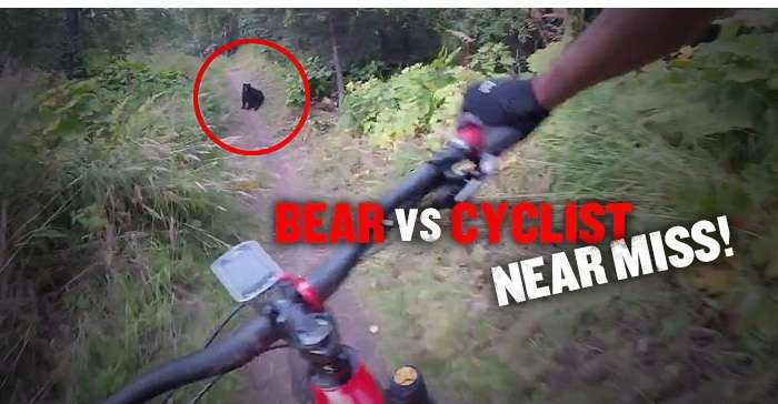 Bear vs cyclist near miss!