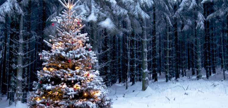 Walddie Christmas Trees: Up to 24% Off Delivery