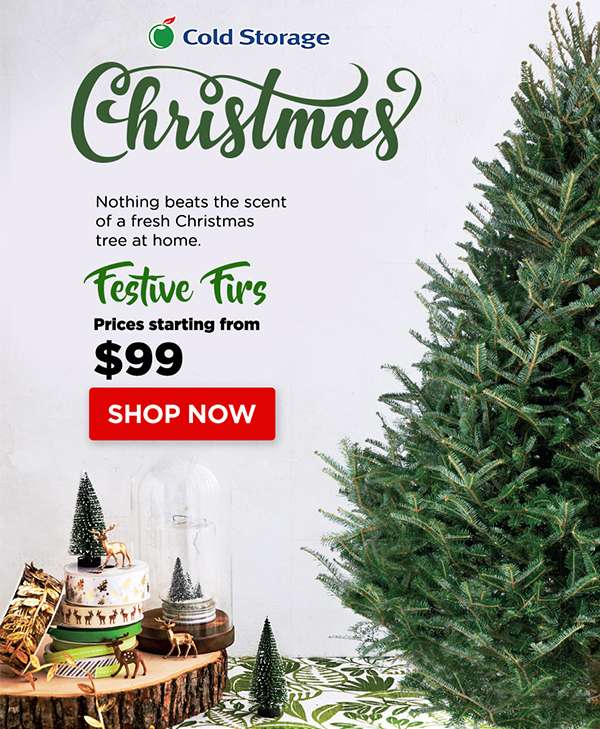 Cold Storage Fresh Tree For The Perfect Christmas