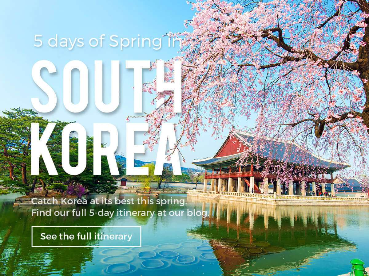 Catch South Korea at its best this spring! Find out our full 5-day itinerary at our blog!