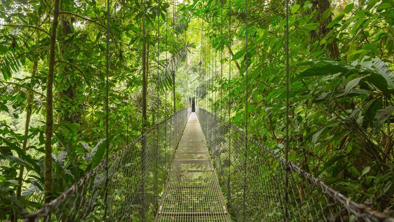 Reforestation programs